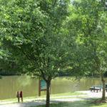 Century Lake (2)