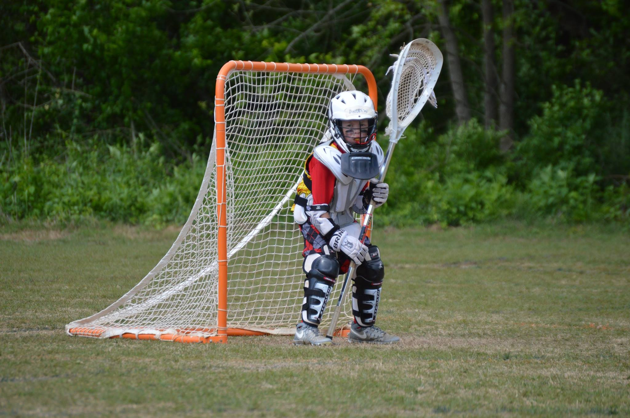 Picture of Lacrosse